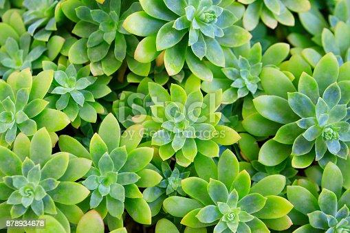 istock Succulent plant flower 878934678
