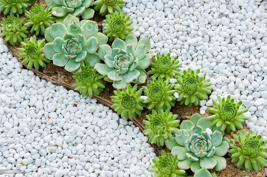 succulent plant stock photo