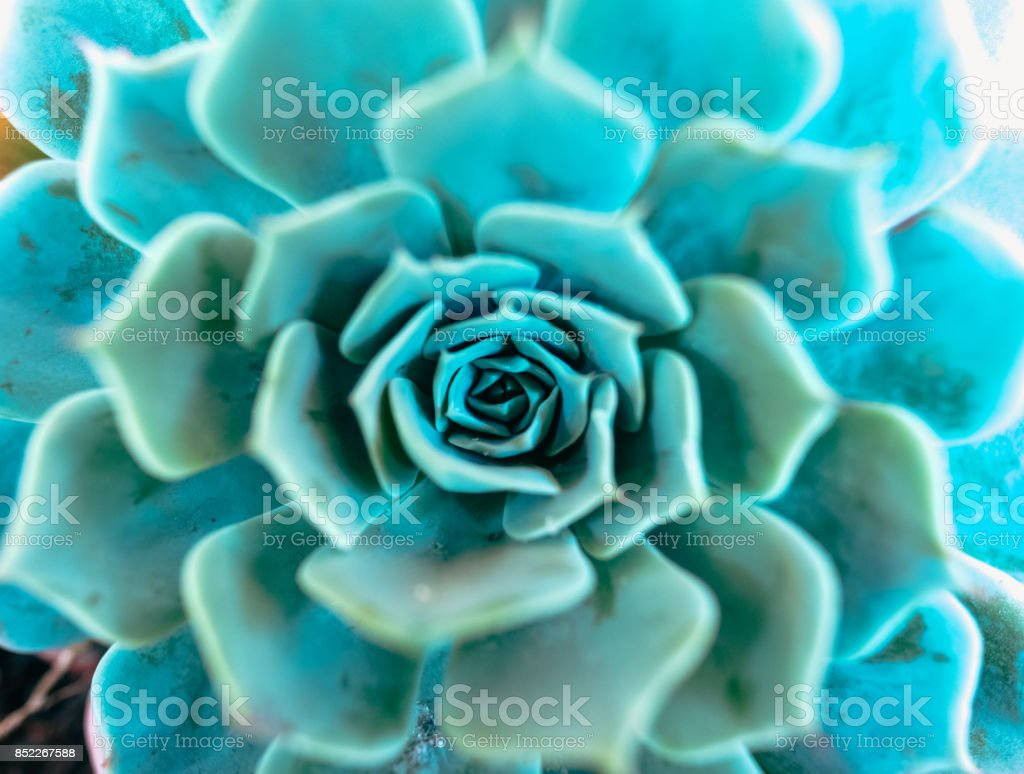Planta suculenta stock photo
