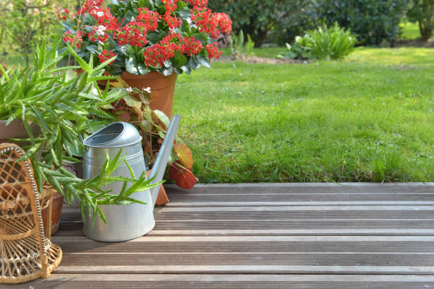 suculenta planta floreciendo en una terraza de madera - foto de stock