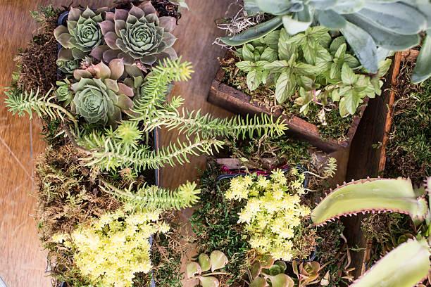 Succulent Planter Boxes stock photo
