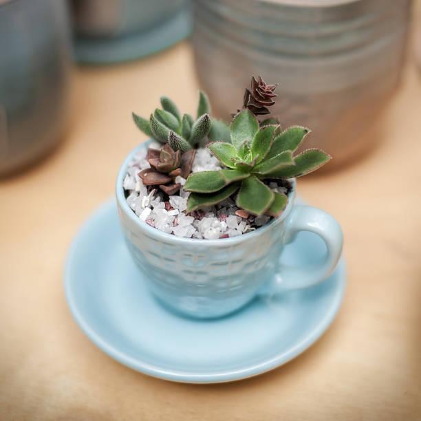 Succulent plants close-up stock photo
