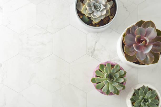 piante succulente, echeveria in vaso. pianta d'interni decorativa. tavolo da lavoro femminile. vista dall'alto. - flat lay foto e immagini stock
