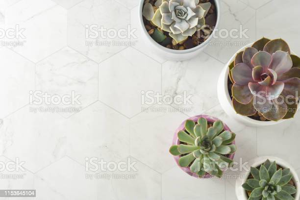 Succulent Plants Echeveria In Pots Decorative Indoor Plant Feminine Work Table Top View Stock Photo Download Image Now Istock