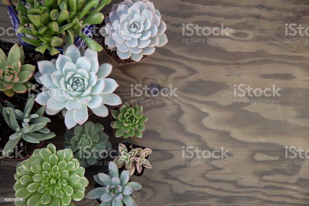 Succulent Plants For Garden stock photo