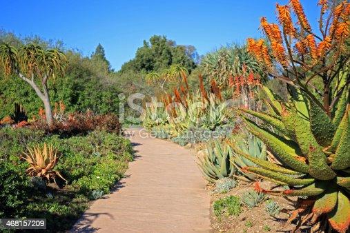 istock succulent Plants Garden 468157209