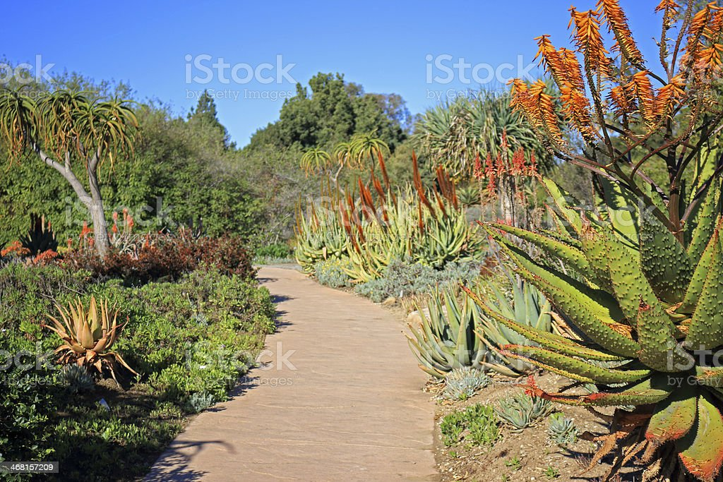 succulent Plants Garden stock photo