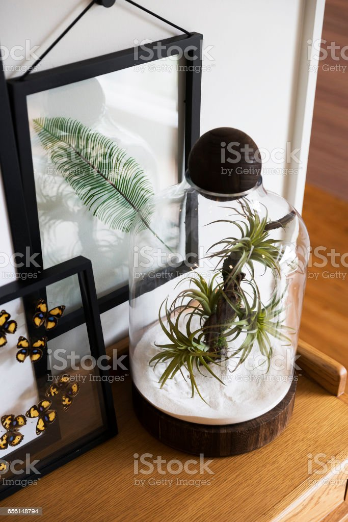 Succulent plants in glass pot for home decoration stock photo