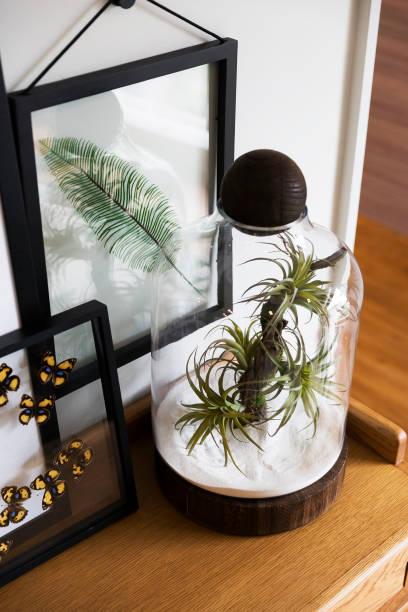 succulent plants in glass pot for home decoration - terrarienpflanzen stock-fotos und bilder