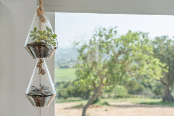 Succulent plants in glass vase decoration hanging stock photo