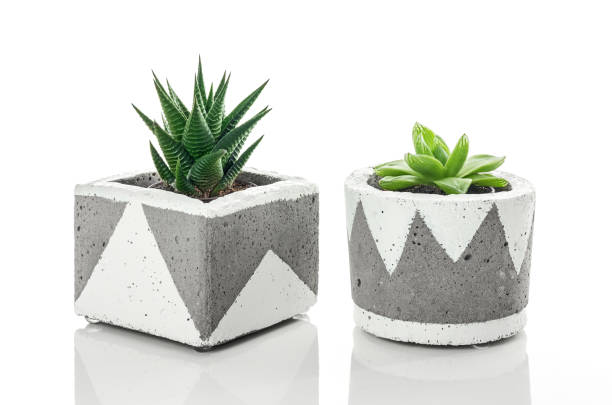 Succulent plants in handmade concrete planters on white background stock photo