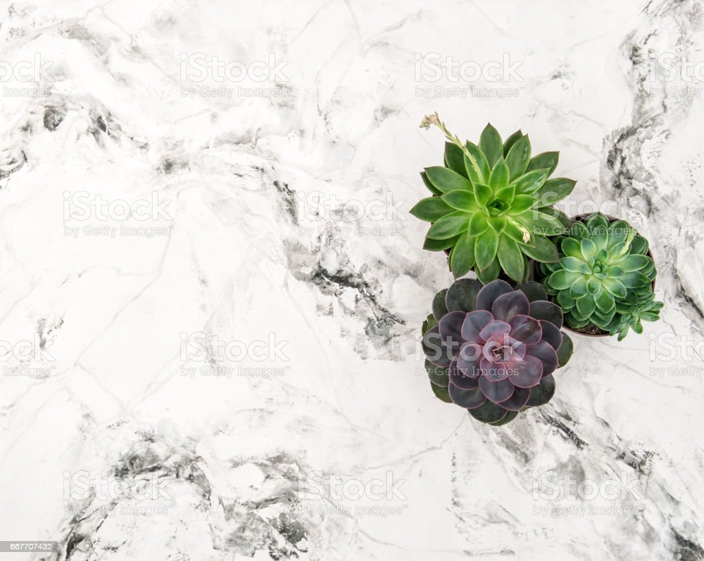 Succulent plants marble background floral flat lay stock photo