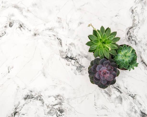 Plantas suculentas mármol fondo floral plano lay - foto de stock