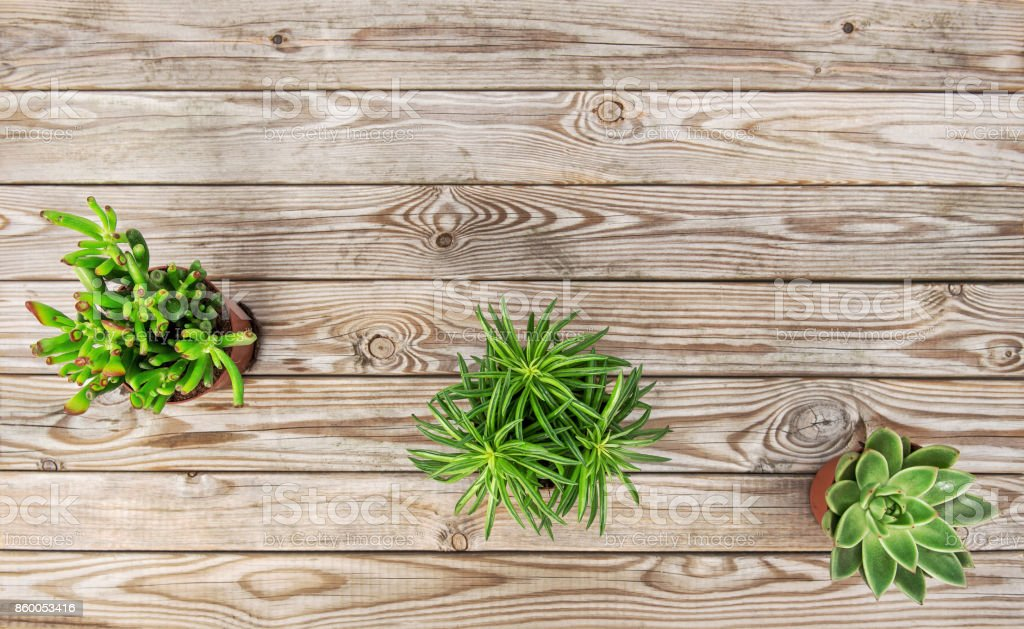 Succulent plants rustic wooden background flat lay stock photo