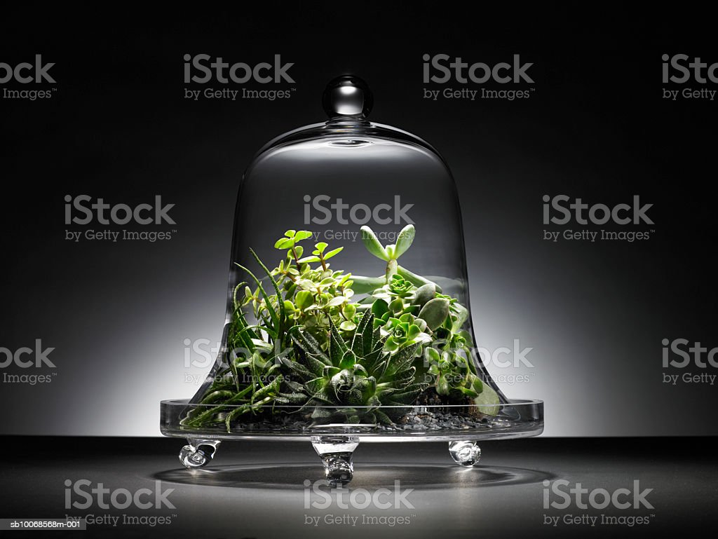 Succulent plants under glass dome royalty free stockfoto
