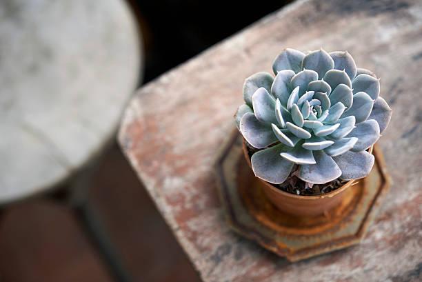 Saftige Blumentopf auf Holztisch no2 – Foto