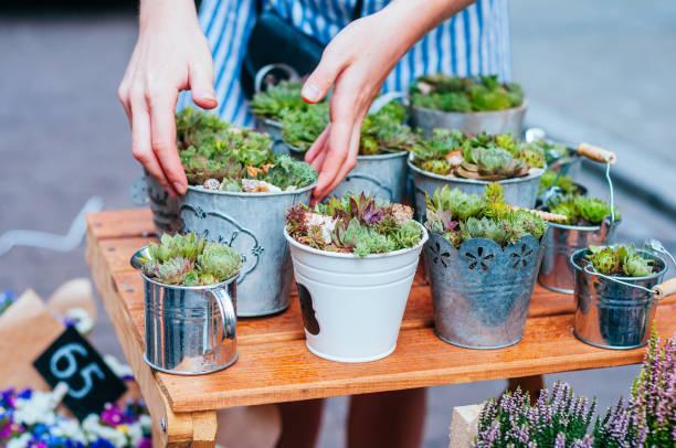 saftige töpfe am blumenmarkt - terrarienpflanzen stock-fotos und bilder