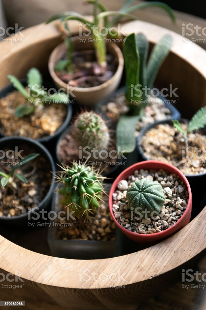 Succulent pots for home or office decoration stock photo