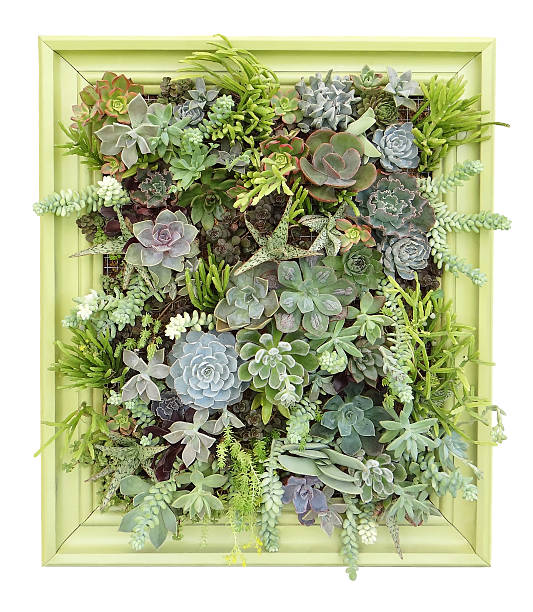 succulent vertical wall hanging stock photo