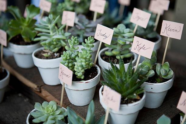 succulent wedding favors - grüne hochzeit themen stock-fotos und bilder