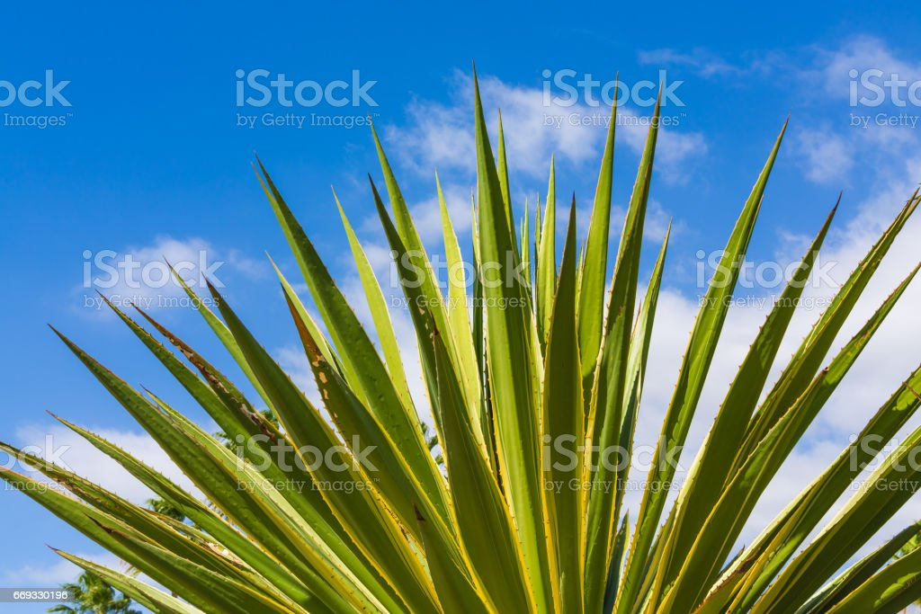 Succulents against the sky stock photo