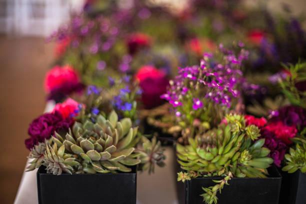 Sukkulenten und Blumen – Foto