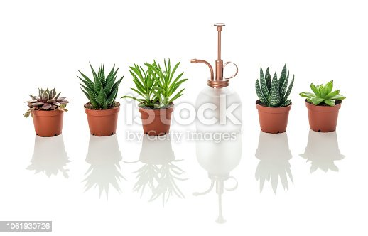 Row of little succulent plants and vintage style plant mister, on white background with reflections.