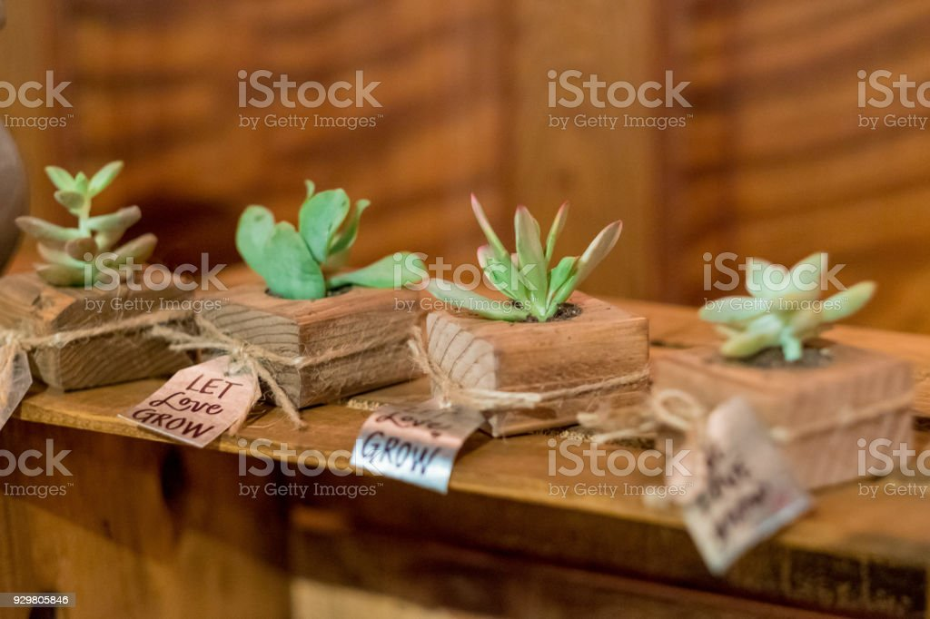 Succulents at Wedding Reception stock photo