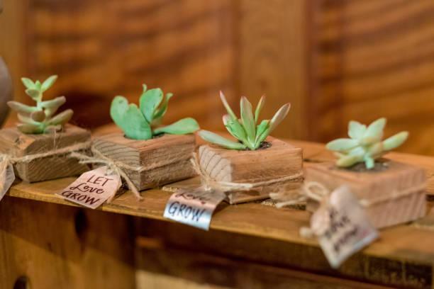 Succulents at Wedding Reception - foto stock
