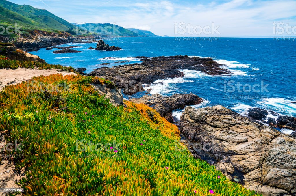 Succulents growing along California coastline pacific coast highway ocean landscape bliss stock photo