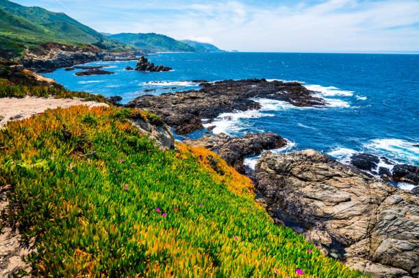 Sukkulenten wachsen entlang California Küste Pazifikküste Autobahn Ozean Landschaft Glückseligkeit – Foto