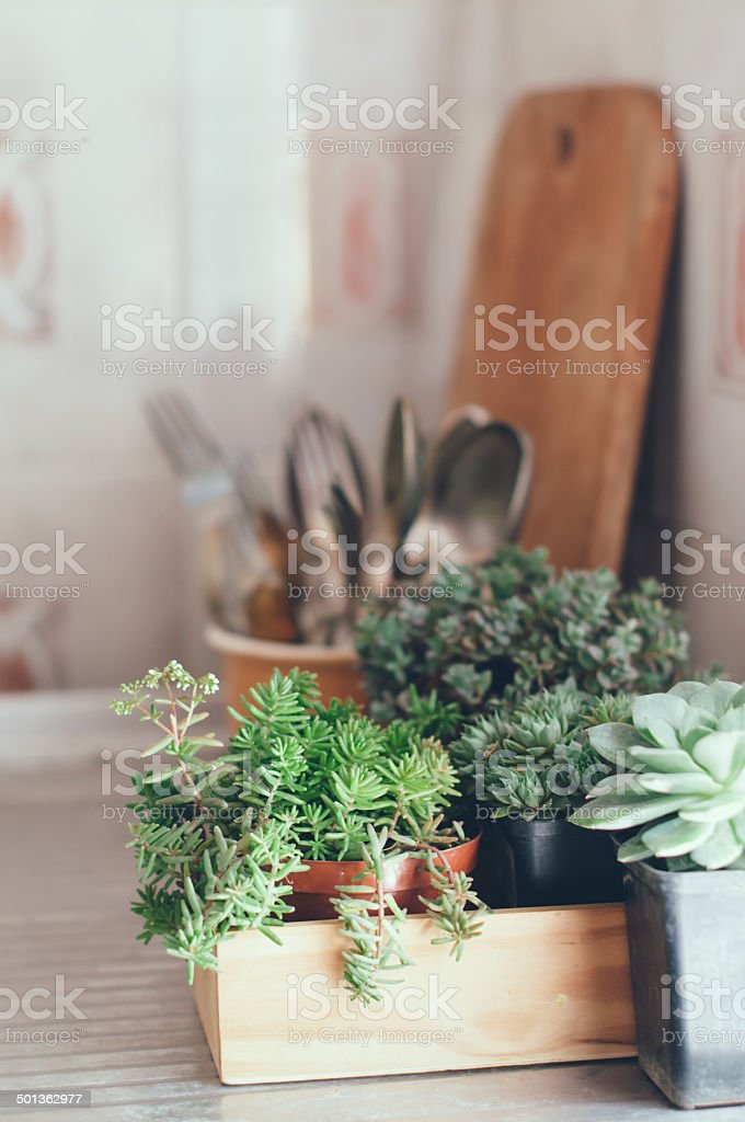 succulents in a wooden box stock photo