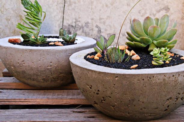 sukkulenten in zement pflanzer - diy beton stock-fotos und bilder