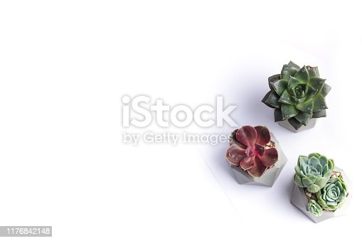 Succulents in concrete flower pots top view. Indoor plants isolated on a white background. Copy space web banner for design