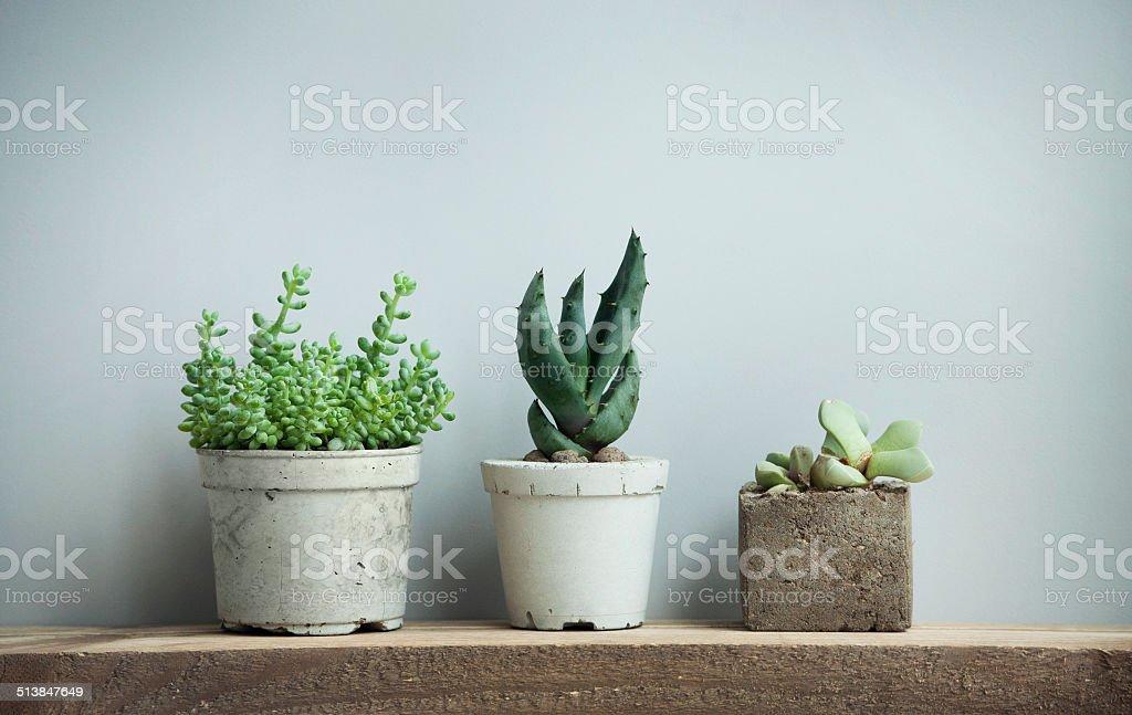 Sukkulenten in diy konkrete Töpfe in skandinavischen home – Foto
