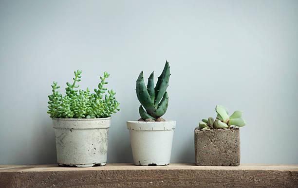 succulents in diy concrete pots in scandinavian  home stock photo
