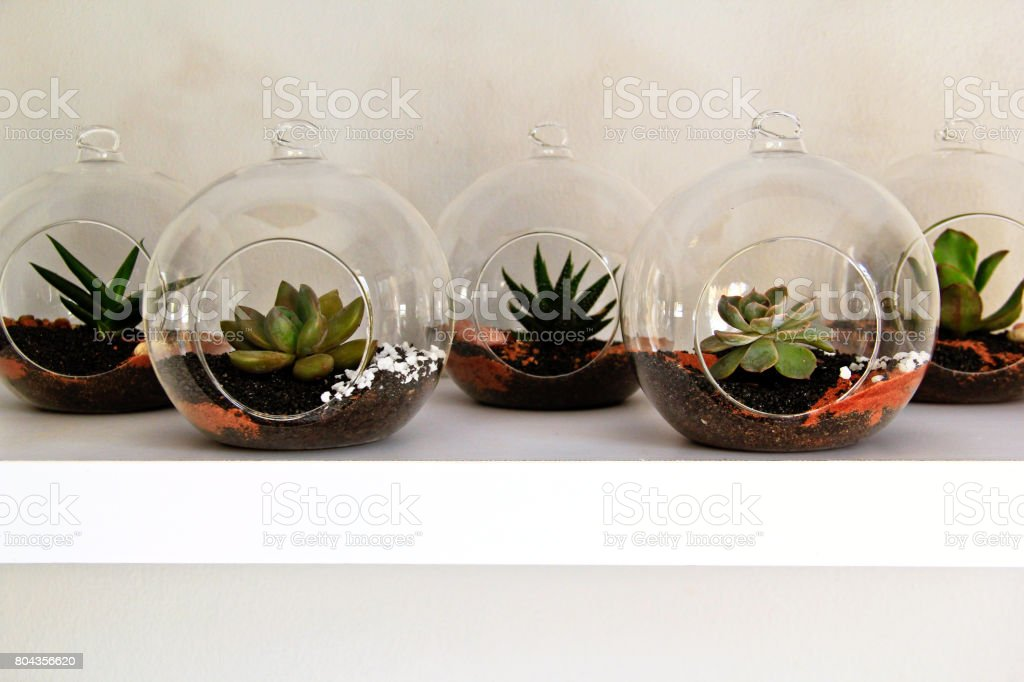 Succulents in round glass terrariums stock photo