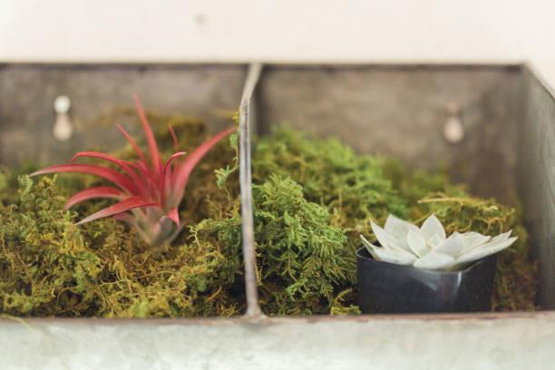 Succulents in waco texas picture id936682694?b=1&k=6&m=936682694&s=612x612&w=0&h=aeqt3mid2 ndputdrbshyv97xrw4ewy  q319ncboum=