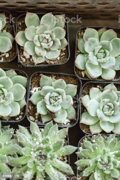 Succulents in waco texas picture id936682778?b=1&k=6&m=936682778&s=612x612&h=ze7y5qf02imeoixmqnyvq5n5zwovzkpyo 0wbqlmzfm=