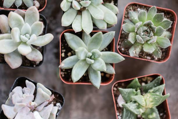 Succulents in waco texas picture id936682836?b=1&k=6&m=936682836&s=612x612&w=0&h=y8m0zpwy7qahuhn0rydku5cahunfemxzdpdyh6mlc6c=