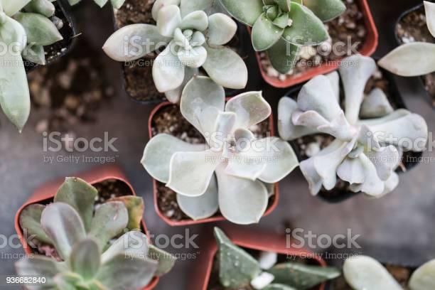 Succulents in waco texas picture id936682840?b=1&k=6&m=936682840&s=612x612&h=wkqa7qqavsehyjjp5azotpzl9bm49laomeyf6cm3ery=