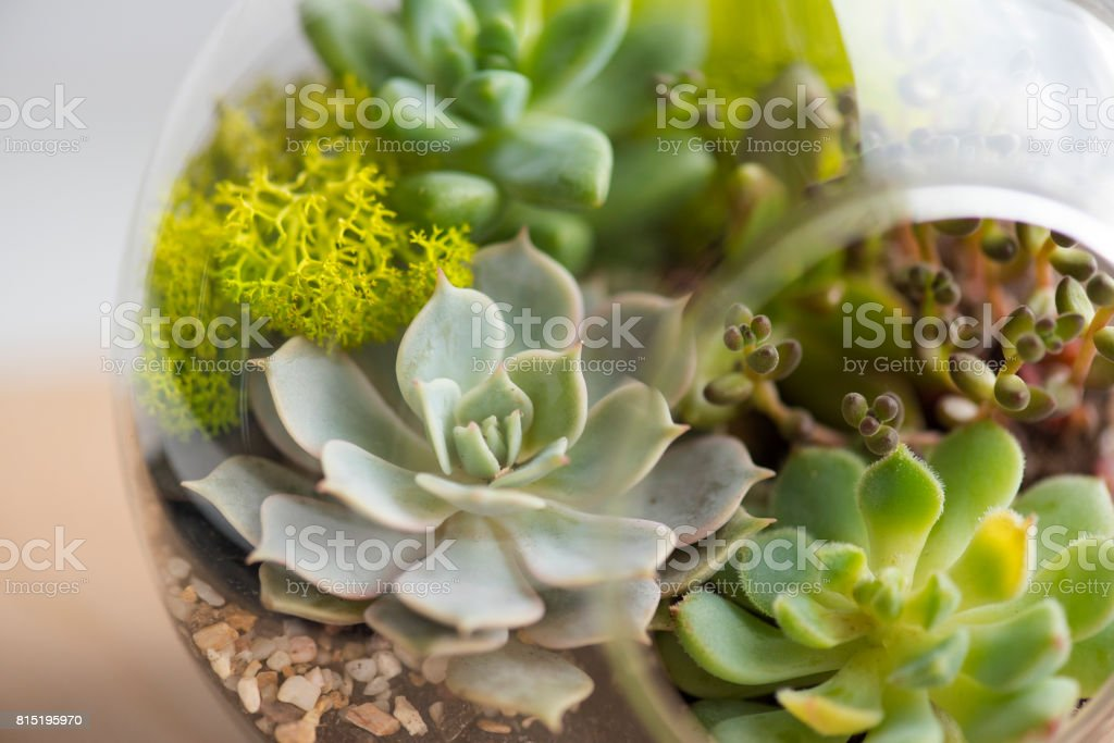 Succulents on the table, succulent is the new modern detail of flats and houses stock photo