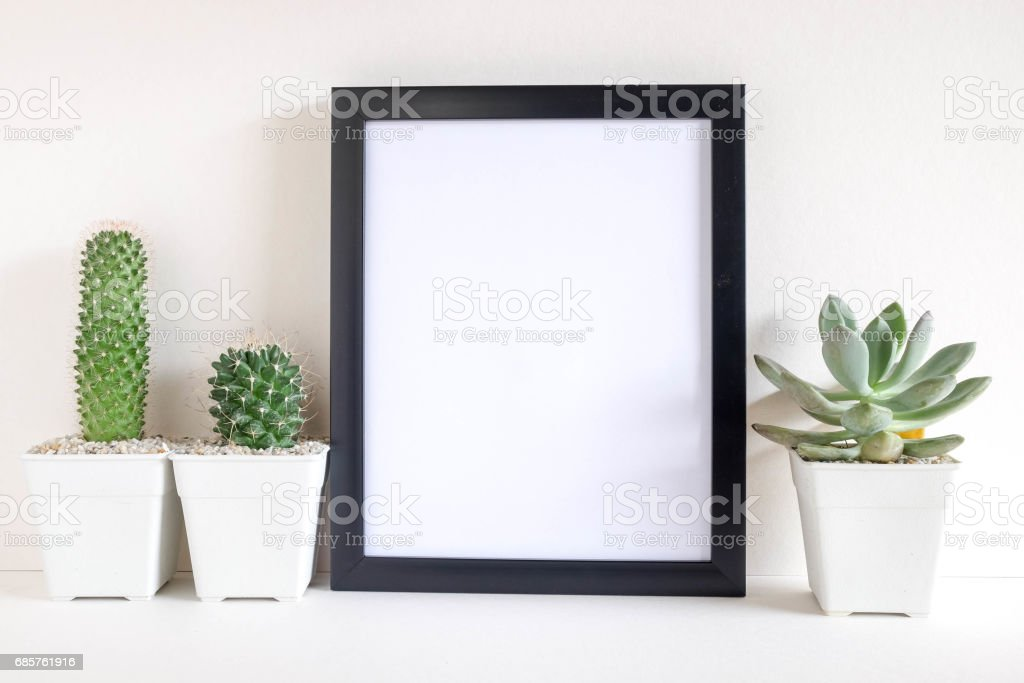 succulents or cactus in concrete pots over white background on the shelf and mock up frame photo zbiór zdjęć royalty-free