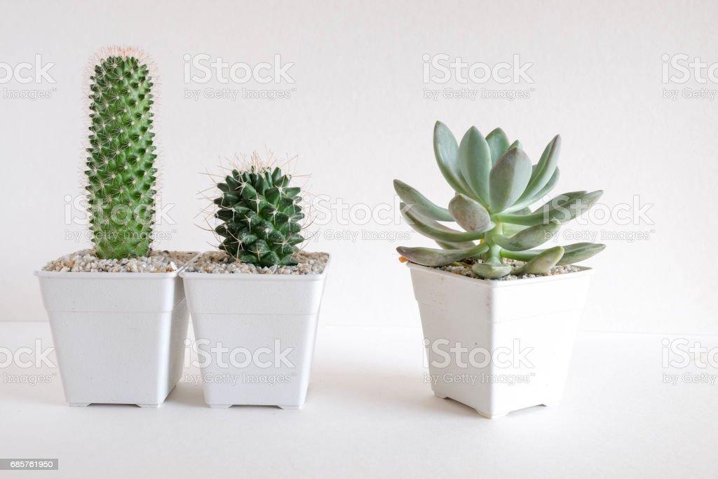 succulents or cactus in concrete pots over white background on the shelf foto de stock libre de derechos