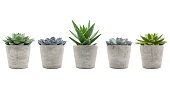 Variety of succulent plants in cement pots isolated on white background - sempervivum, aloe mitriformis and echeveria
