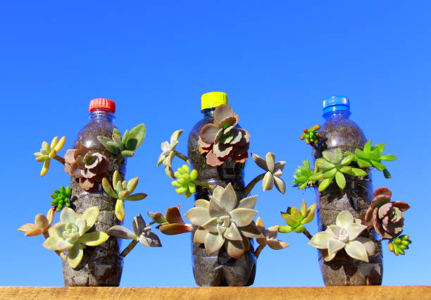 Succulents plants in bottles. stock photo