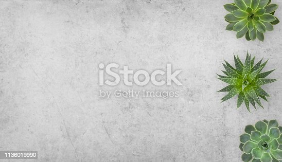 Succulents plants border on concrete background