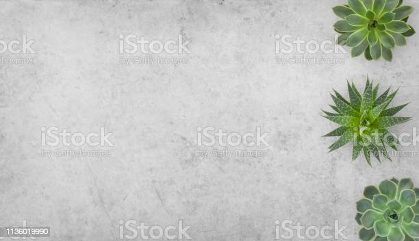 Succulents plants on concrete background picture id1136019990?b=1&k=6&m=1136019990&s=612x612&h=iugkptyjmelrgs 8xjnpkkrblzgxthwasmkvzl mlvg=