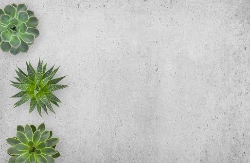 Succulents plants border on concrete background