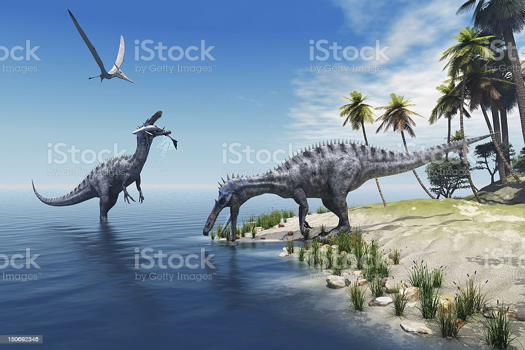 Suchomimus Dinosaurs A large fish is caught by a Suchomimus dinosaur while a flying Pterosaur dinosaur watches for scraps to eat. Animal Stock Photo